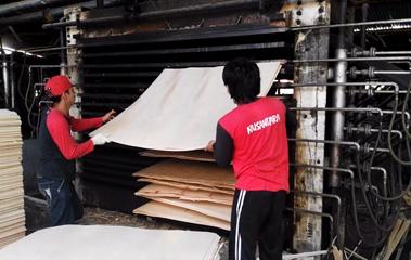 Plywood Veneer Hot Press Dryer Machine // 35 CBM/ Day
